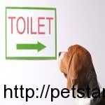 dog-toilet