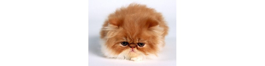 لوازم گربه